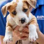 3 Ways Pet Adoption Can Be a Win for All